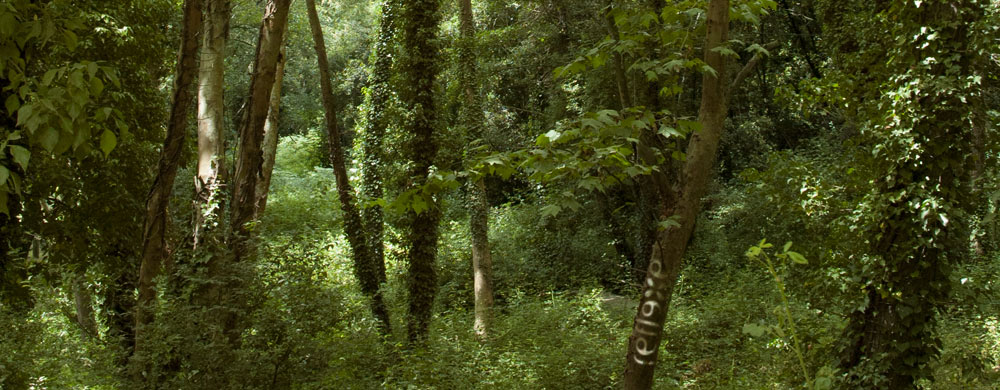 publicitat sostenible al bosc
